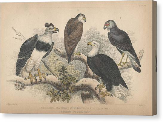 Harpy Eagle Canvas Print - Eagles by Dreyer Wildlife Print Collections