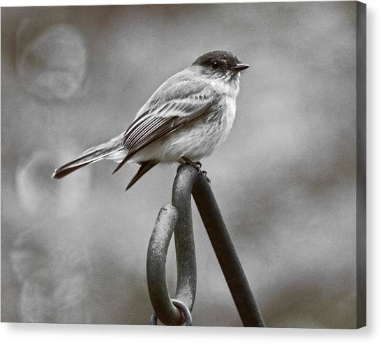 Canvas Print featuring the photograph Eastern Phoebe by Robert L Jackson