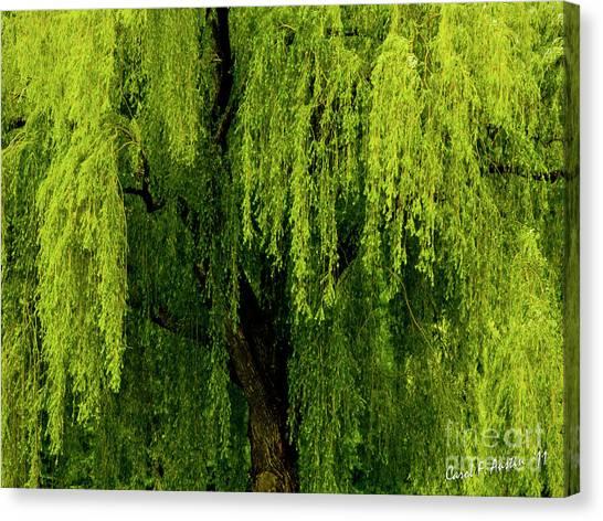 Enchanting Weeping Willow Tree  Canvas Print