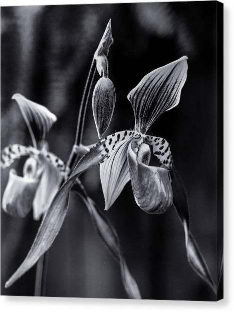 90286 Encinitas Orchid Canvas Print