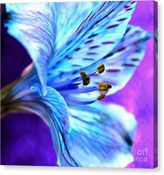 Amaryllis Canvas Print - Every Waking Moment by Krissy Katsimbras