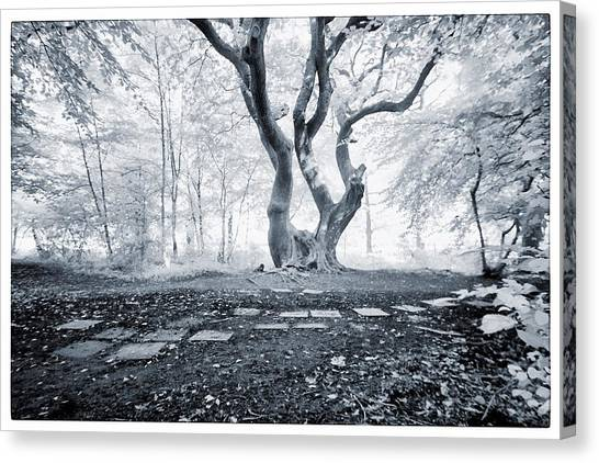 Fairy Tree Canvas Print