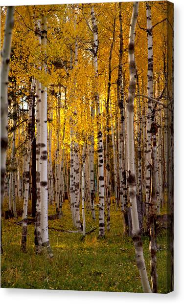 Fall At Snowbowl Canvas Print
