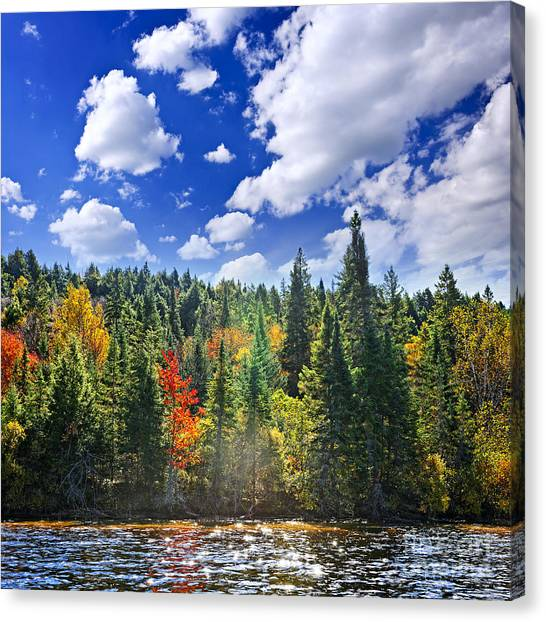 Algonquin Park Canvas Print - Fall Forest In Sunshine by Elena Elisseeva