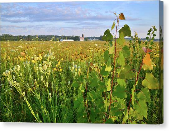 Prairie Sunrises Canvas Print - Farm Scene In Glacial Park by Ray Mathis