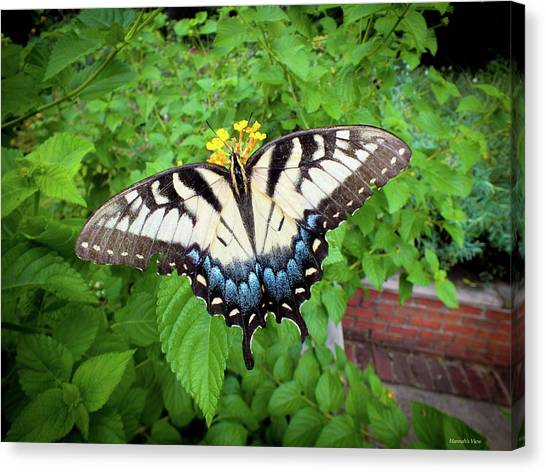 Female Eastern Tiger Swallowtail  Canvas Print
