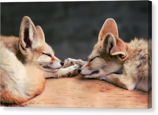 Kangaroo Canvas Print - Fennec Fox by Maye Loeser