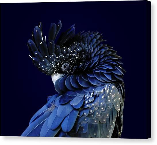 Australian Canvas Print - Fibonacci Cockatoo by Debi Dalio
