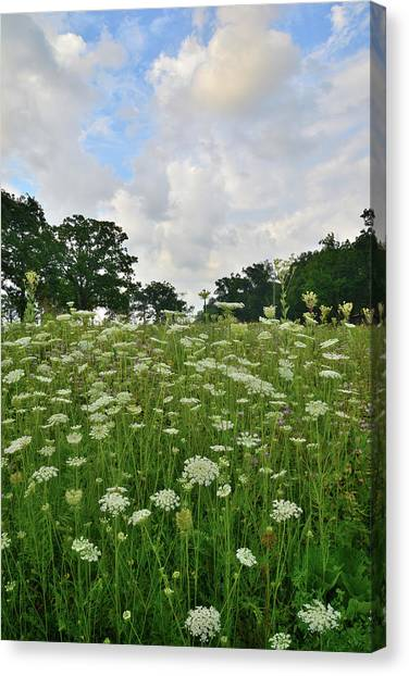 Prairie Sunrises Canvas Print - Field Of Queen Anne's Lace In Glacial Park by Ray Mathis
