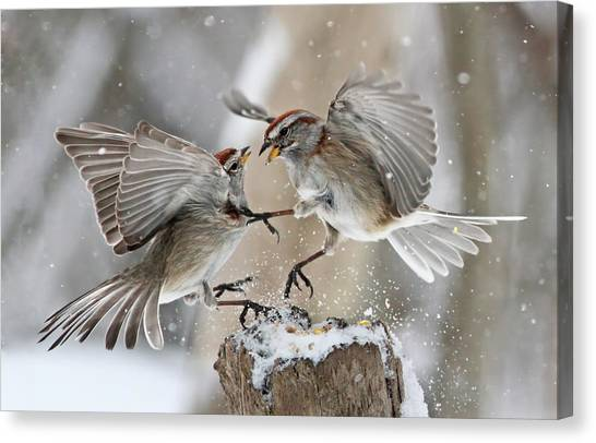 Sparrows Canvas Print - Fight Club by Mircea Costina