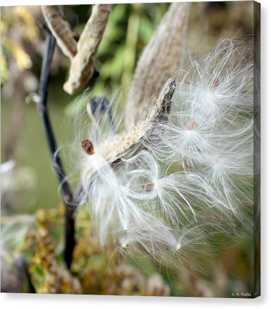 Flight Of The Milkweed Canvas Print
