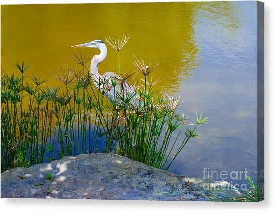 Florida Heron Canvas Print by Andrea Simon