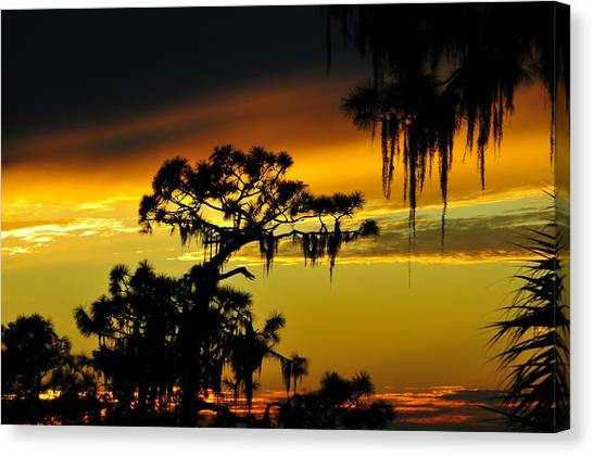 Pine Trees Canvas Print - Central Florida Sunset by David Lee Thompson