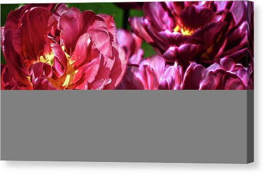 Flowers And Fractals Canvas Print