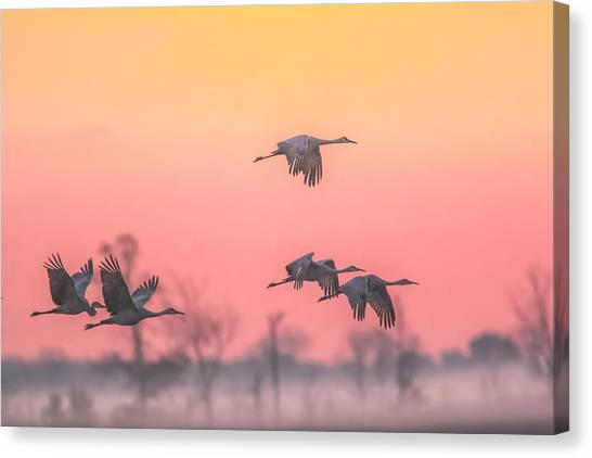 Flying Into The Light And Fog Canvas Print