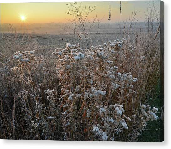 Prairie Sunrises Canvas Print - Fog On The Prairie In Glacial Park by Ray Mathis