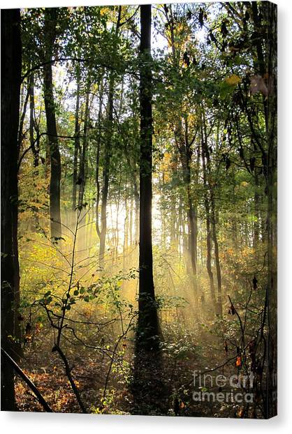 Forest Light  Canvas Print