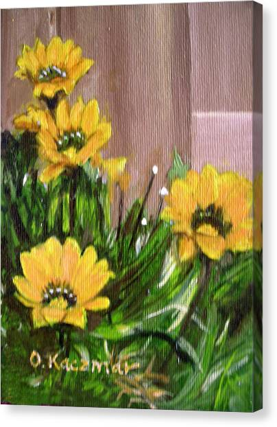 Gazanias Canvas Print by Olga Kaczmar