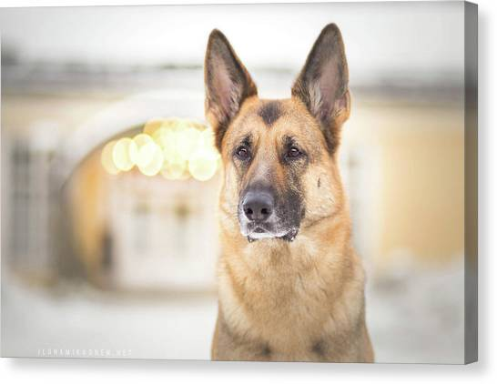 German Shepherds Canvas Print - German Shepherd by Jackie Russo