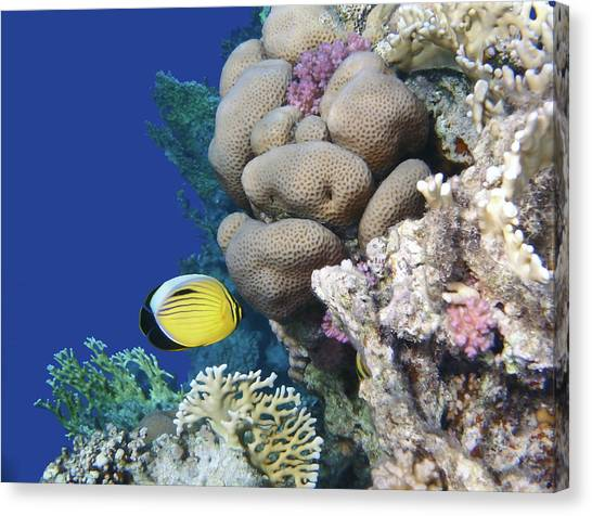 Glorious Red Sea World 3 Canvas Print