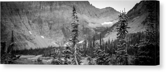 Gnarled Pines Canvas Print