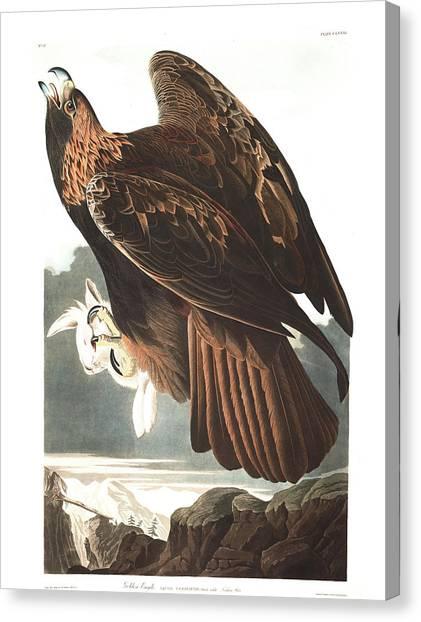 Eagle In Flight Canvas Print - Golden Eagle by John James Audubon