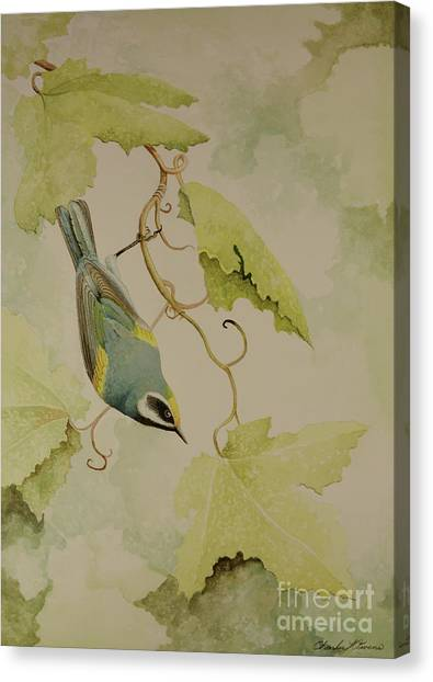 Golden-winged Warbler Canvas Print