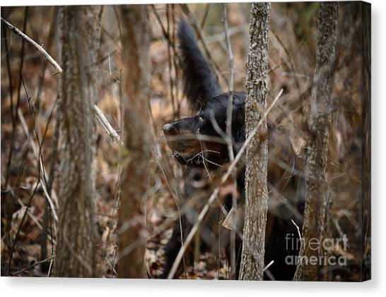 Woodcock Canvas Print - Peat's Element by Chip Laughton