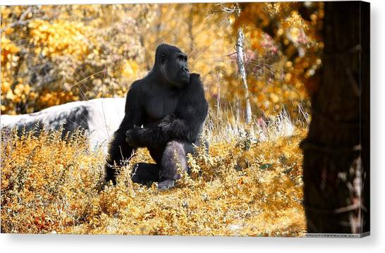 Apes Canvas Print - Gorilla by Maye Loeser