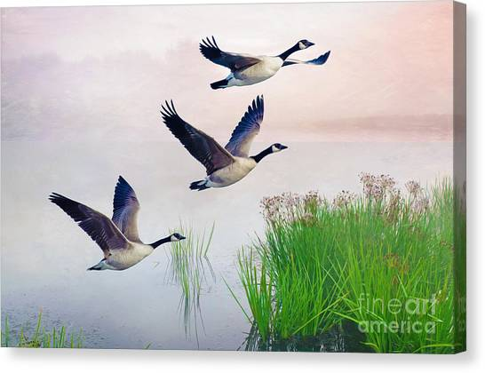 Canada Goose Canvas Print - Graceful Geese by Laura D Young