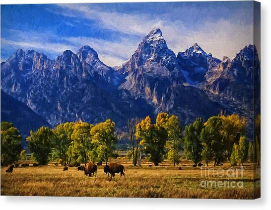 Great Falls Of Yellowstone Canvas Print - Grand Teton National Park Bison by Priscilla Burgers
