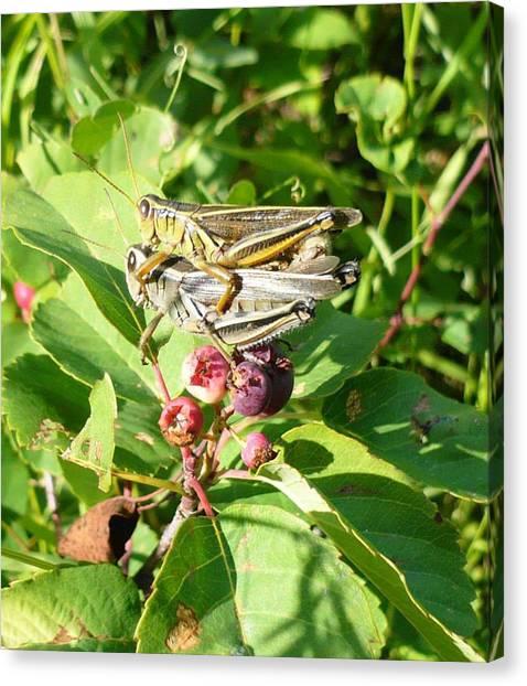 Grasshopper Love Canvas Print