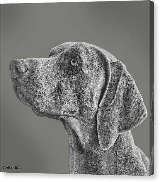Weimaraners Canvas Print - Gray Ghost by Larry Linton