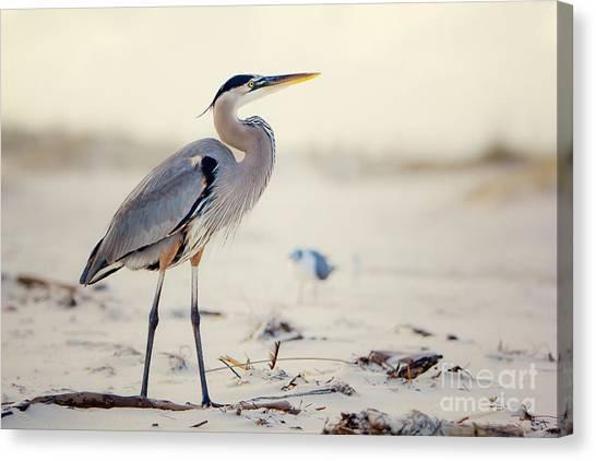 Beach Canvas Print - Great Blue Heron  by Joan McCool