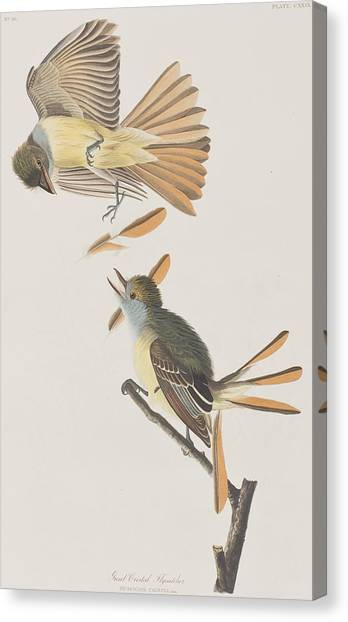 Flycatchers Canvas Print - Great Crested Flycatcher by John James Audubon