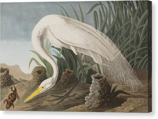 Egrets Canvas Print - Great Egret by John James Audubon