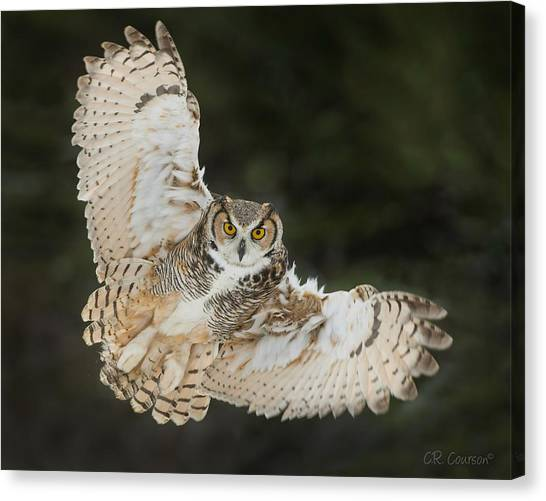 Great Horned Owl Wingspread Canvas Print