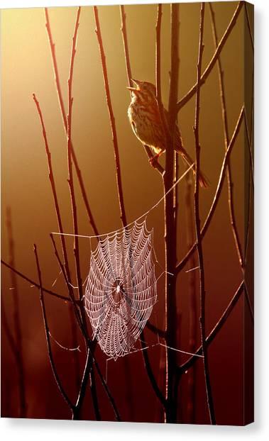 Spider Web Canvas Print - Harmony by Rob Blair