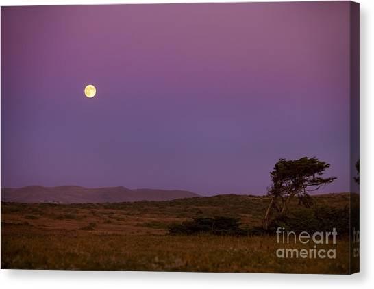 Bodega Canvas Print - Harvest Moon Over Bodega Bay by Diane Diederich