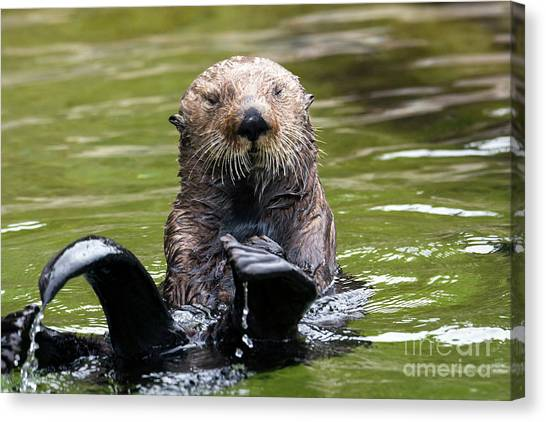 Otters Canvas Print - Heads Or Tails by Mike Dawson