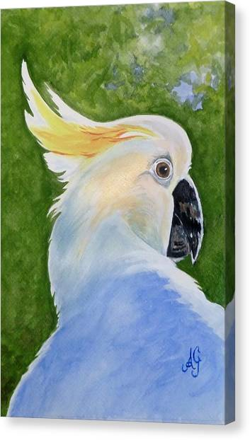 Hello, Cocky Canvas Print