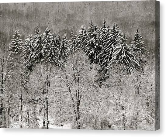 Hemlocks Over Whaley Lake  Canvas Print by Jeremy Wolff