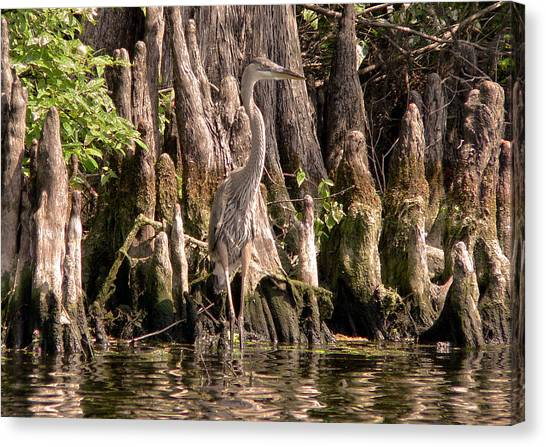 Great Cypress Canvas Print - Heron And Cypress Knees by Steven Sparks