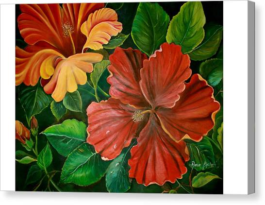 Hibiscus Canvas Print by Ansie Boshoff