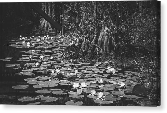 Okefenokee Canvas Print - Hidden Beauty In The Swamp by Library Of Congress
