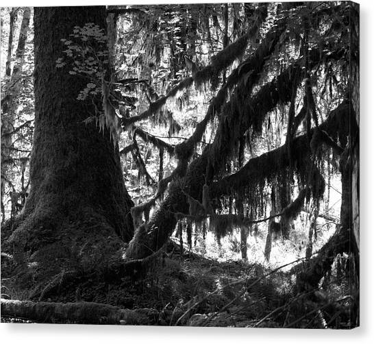 Hoh Rain Forest Canvas Print by Sonja Anderson