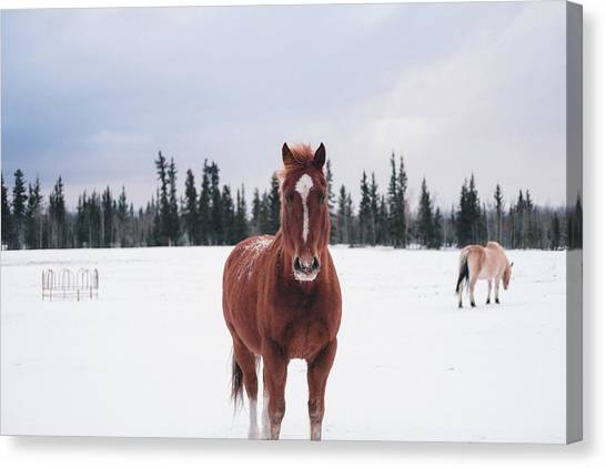 Horse Farms Canvas Print - Horse by Maye Loeser