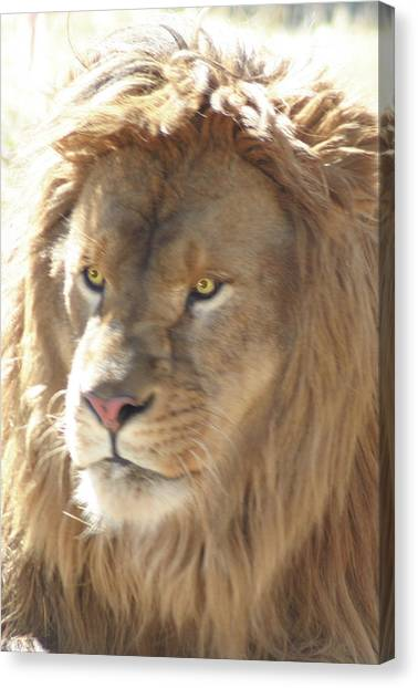 I Am .. The Lion Canvas Print