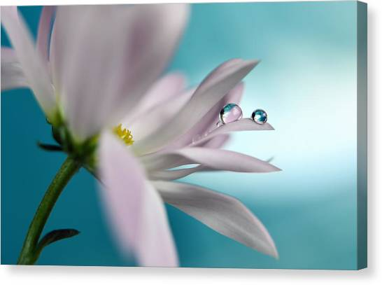 Drops Canvas Print - In Turquoise Company by Heidi Westum