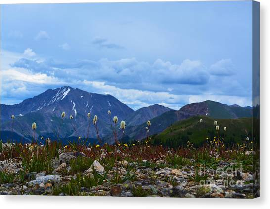 Canvas Print featuring the photograph Independence Pass by Kate Avery